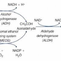 Αλκοόλ και χημεία - συνέχεια