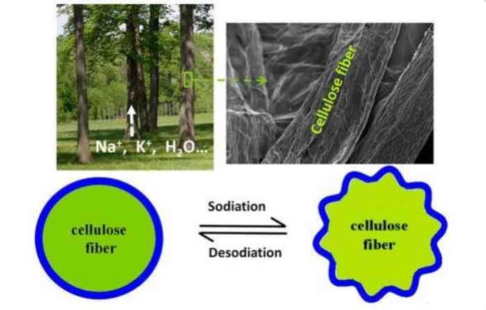Νέες οικολογικές μπαταρίες, φτιαγμένες από ξύλο