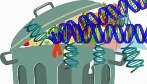 Αχρηστο το 92% του DNA του Ανθρώπου