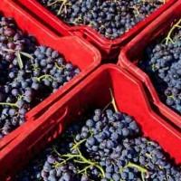 Οίνου γνώση: η επιστήμη του κρασιού