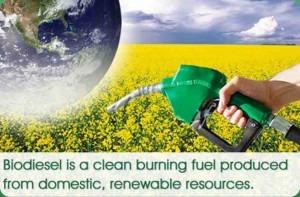 Εναλλακτικά καύσιμα – Καλλιεργημένο ντίζελ