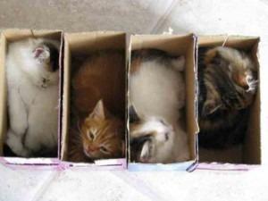 Χημεία γάτας : Γιατί οι γάτες λατρεύουν τα κουτιά;