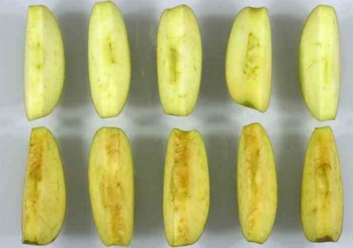 Στις ΗΠΑ το πρώτο μεταλλαγμένο μήλο